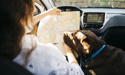 จริงหรือ ? มีน้องหมาไปด้วยช่วยให้ขับรถไม่ประมาท พาน้องไปด้วยอุ่นใจกว่า